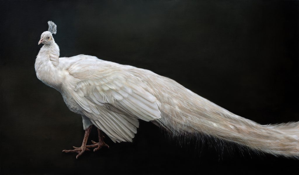 White Peacock 90 x 154 cm (SOLD)